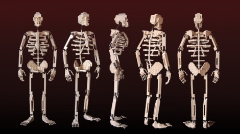 Skeleton LEGO CUUSOO